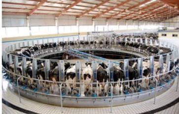 Distribuidor de leche Sevilla